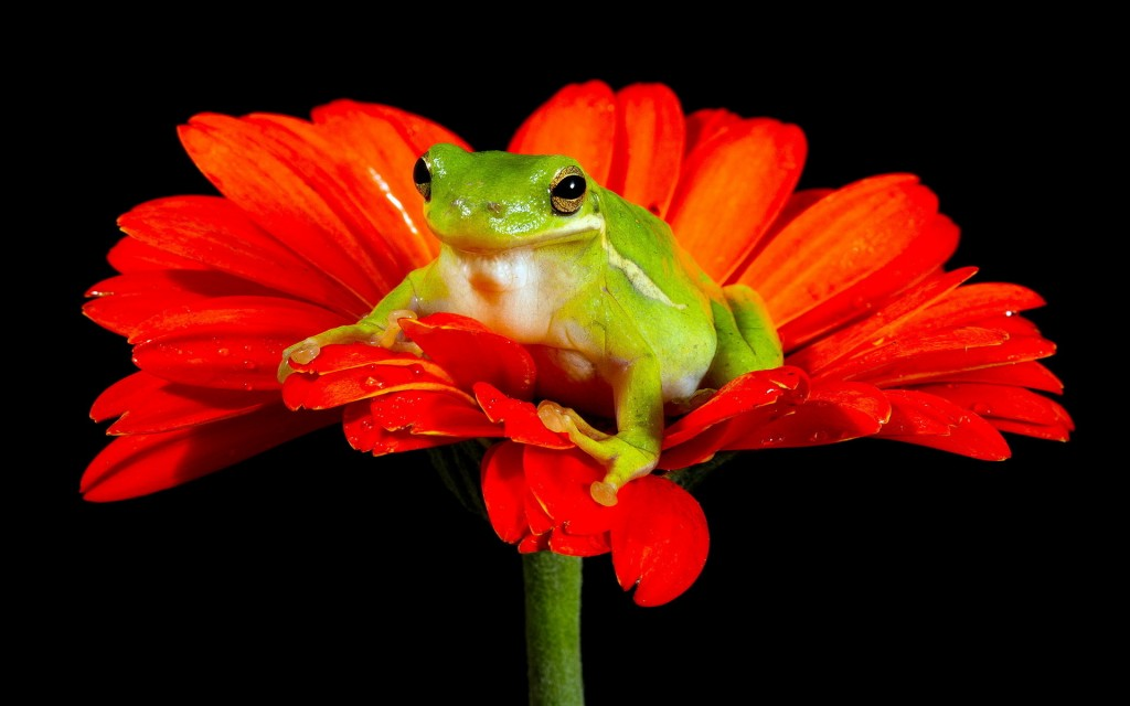 Frogs And Flowers wallpapers HD