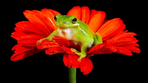 Frogs And Flowers wallpapers high quality
