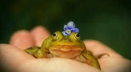 Frogs And Flowers Photo