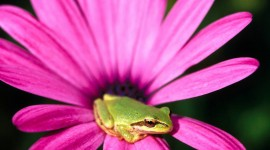 Frogs And Flowers Photo#1