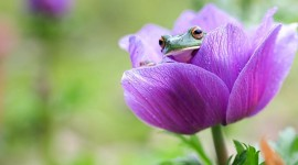 Frogs And Flowers Wallpaper 1080p