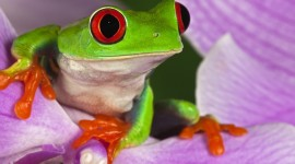 Frogs And Flowers Wallpaper