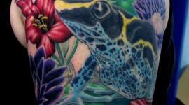 Frogs And Flowers Wallpaper For IPhone