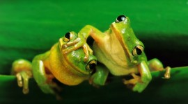 Frogs And Flowers Wallpaper For PC