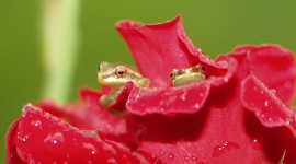 Frogs And Flowers Wallpaper Full HD