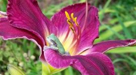 Frogs And Flowers Wallpaper Gallery
