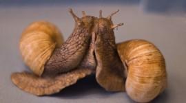 Kiss Snails Desktop Wallpaper