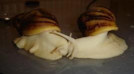 Kiss Snails Photo