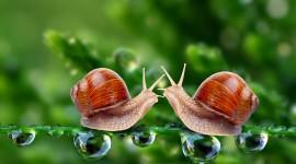 Kiss Snails Photo Download