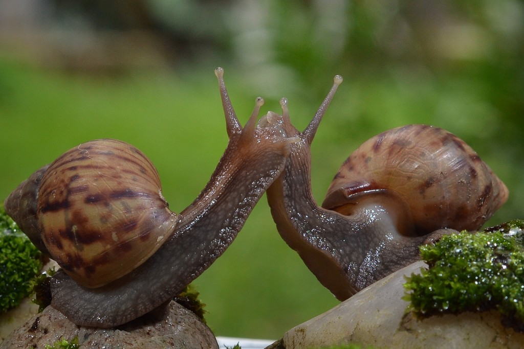 Kiss Snails wallpapers HD