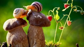 Kiss Snails Wallpaper For Desktop