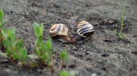 Kiss Snails Wallpaper For PC