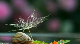 Kiss Snails Wallpaper Full HD