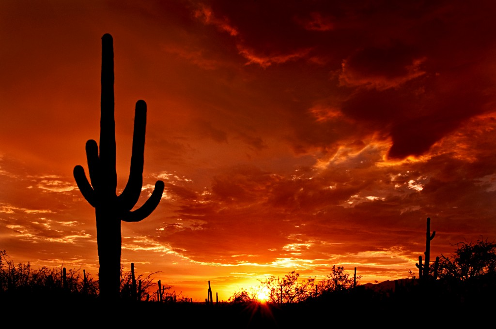 Lone Cactus wallpapers HD