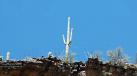 Lone Cactus Photo