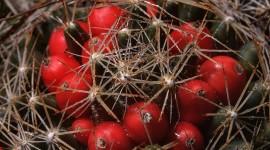Lone Cactus Wallpaper 1080p