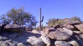 Lone Cactus Wallpaper
