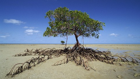 Mangrove Trees wallpapers high quality