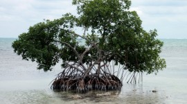 Mangrove Trees Photo Download