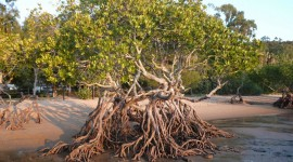 Mangrove Trees Wallpaper Gallery