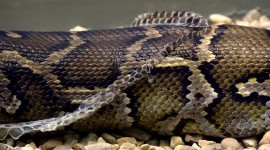 Molting Snakes Wallpaper Free
