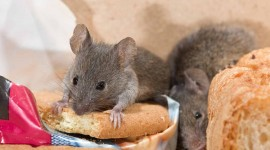 Mouse In The House Photo Download