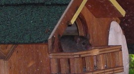 Mouse In The House Photo Free#2
