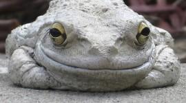 Smiling Frog Wallpaper For Desktop
