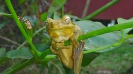 Smiling Frog Wallpaper Free