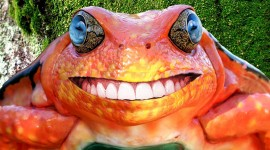 Smiling Frog Wallpaper Gallery