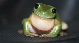 Smiling Frog Wallpaper HQ