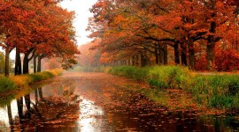 The Leaves On The Water Photo