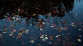 The Leaves On The Water Photo Free