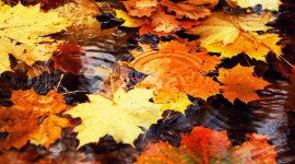The Leaves On The Water Wallpaper