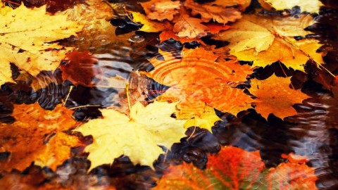 The Leaves On The Water wallpapers high quality