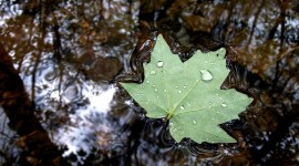 The Leaves On The Water Wallpaper Free