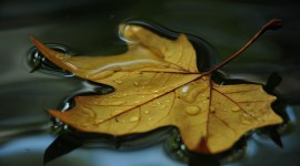 The Leaves On The Water Wallpaper Gallery