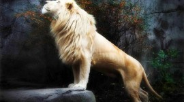 White Lion Image Download