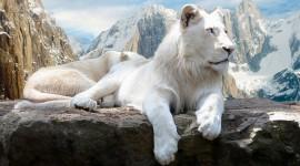 White Lion Wallpaper Free