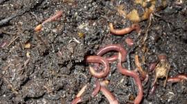 Worms Wallpaper For Desktop