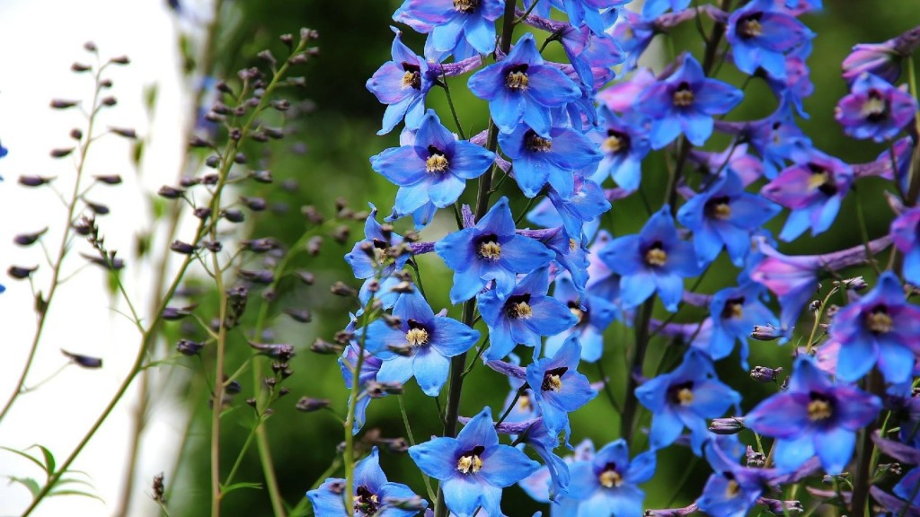 4K Blue Flowers wallpapers HD