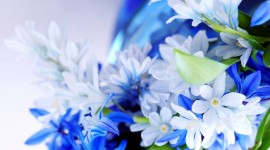 4K Blue Flowers Desktop Wallpaper For PC