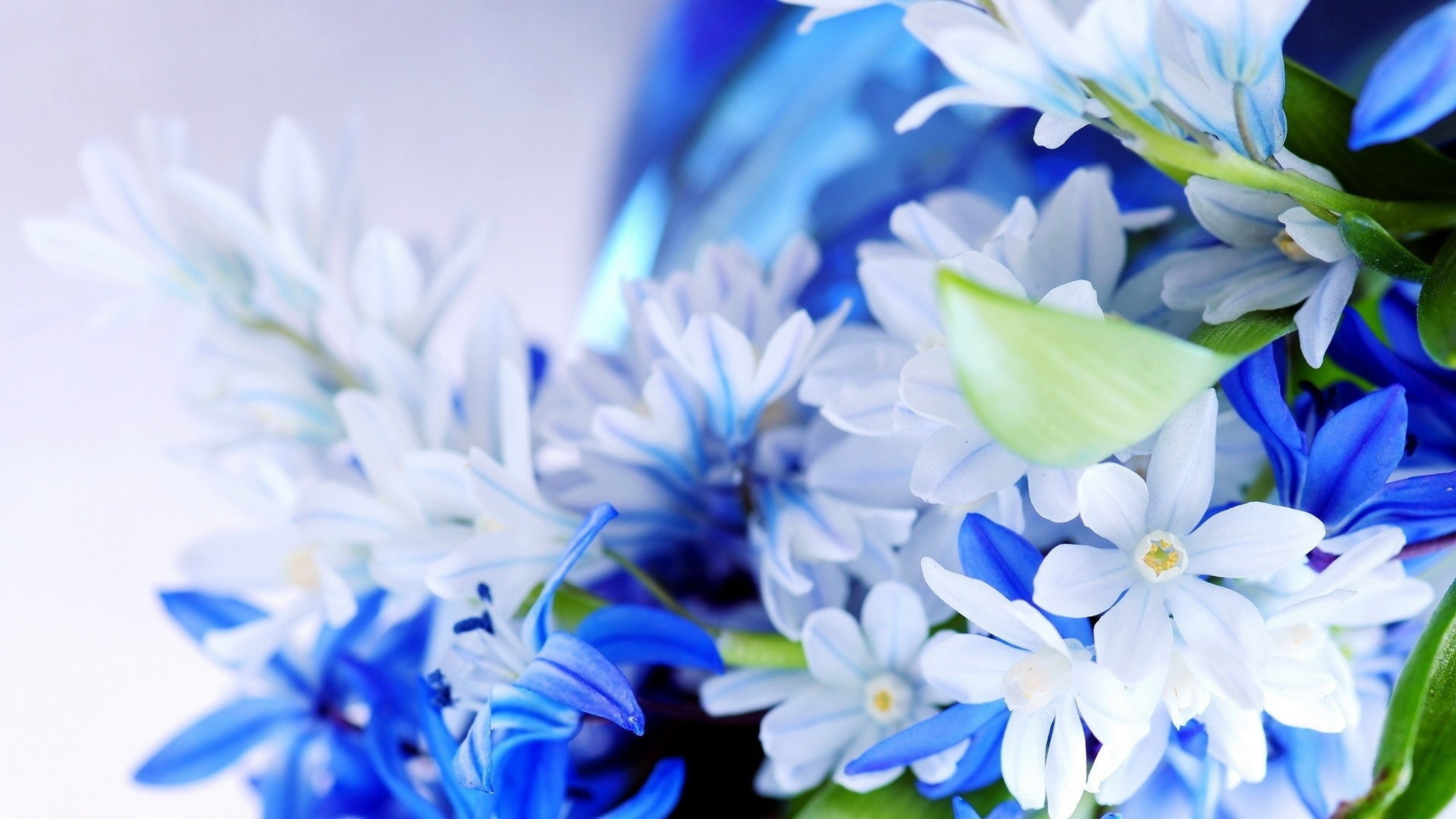 4K Blue Flowers Wallpapers High Quality | Download Free