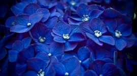 4K Blue Flowers Desktop Wallpaper HD