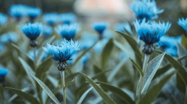 4K Blue Flowers Photo