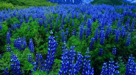 4K Blue Flowers Photo Download
