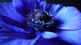 4K Blue Flowers Photo Free