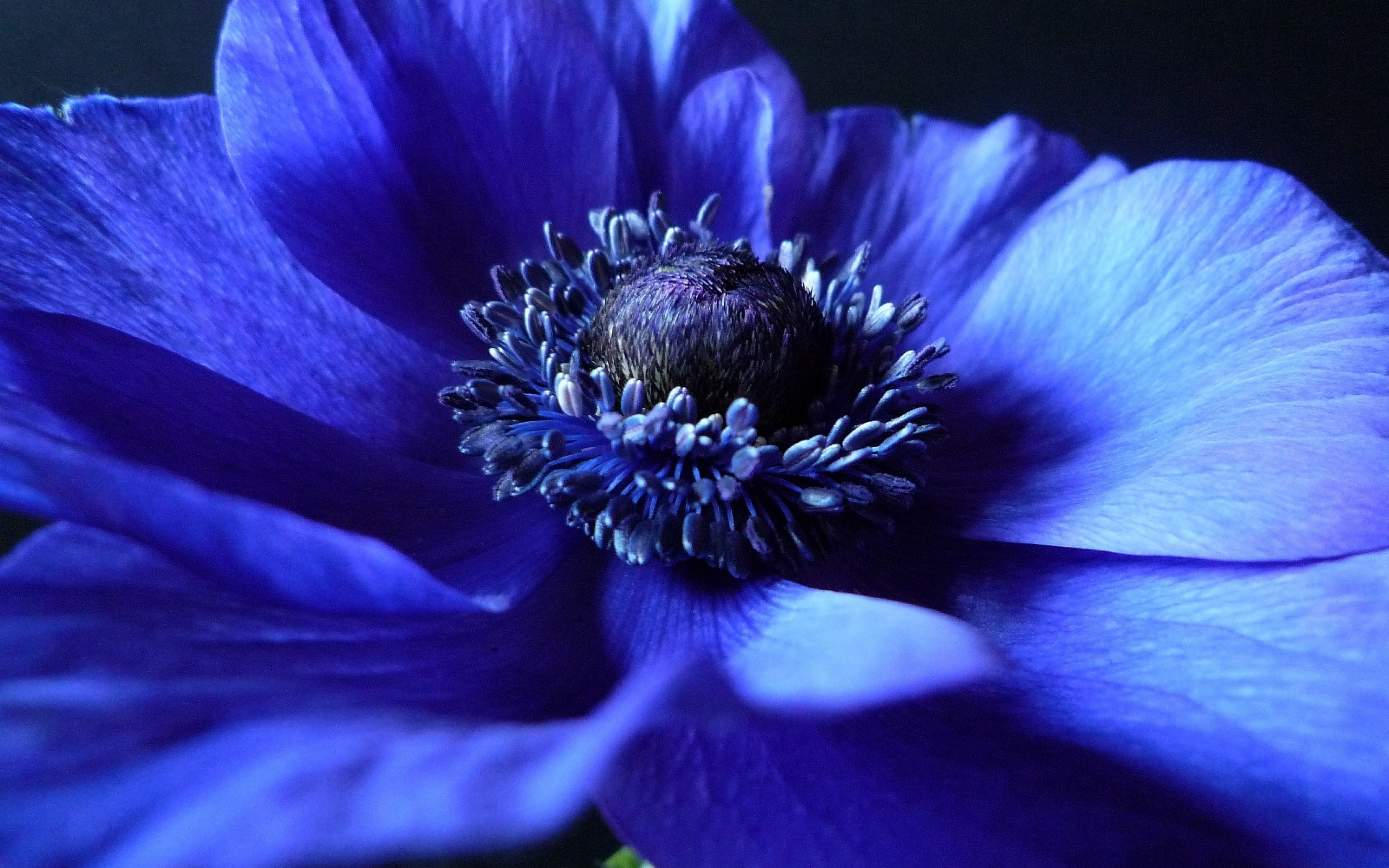 4k Blue Flowers Wallpapers High Quality Download Free