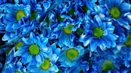 4K Blue Flowers Wallpaper