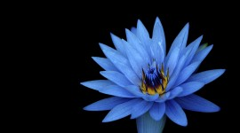 4K Blue Flowers Wallpaper Free